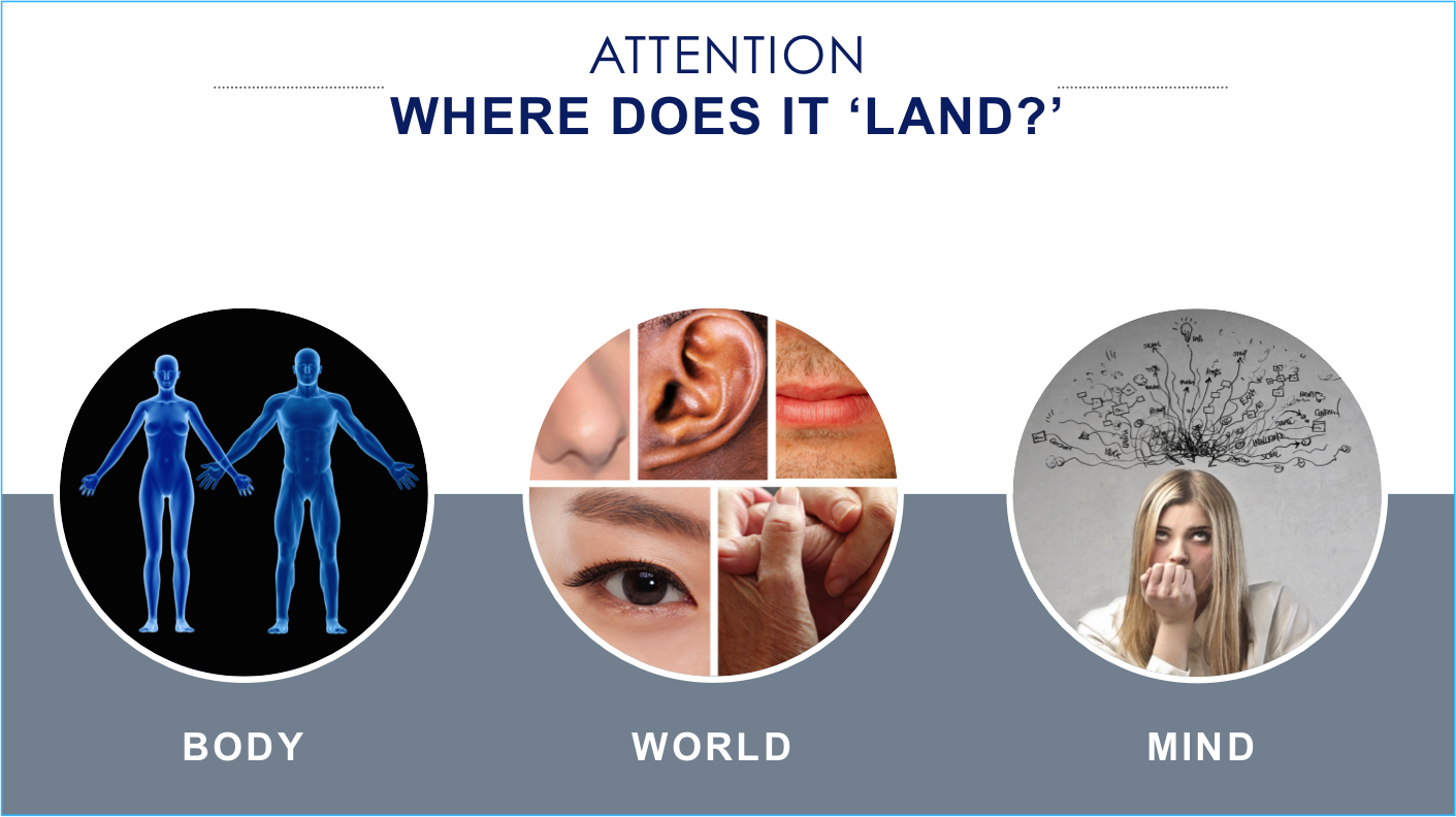 cropped-version-where-attention-lands